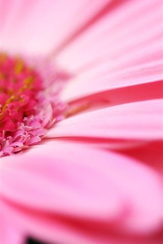 ピンクの花マクロ 750x1334 Iphone 8 7 6 6s 壁紙 背景 画像