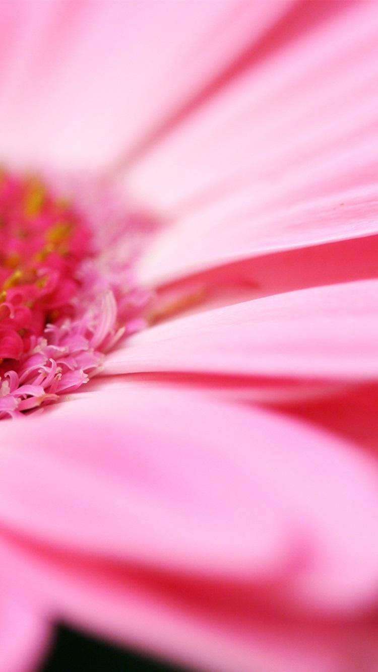 壁紙 ピンクの花マクロ 2560x1600 Hd 無料のデスクトップの背景 画像