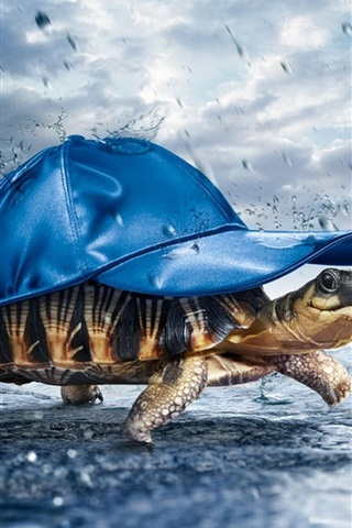 iPhone Wallpaper Turtle carrying a hat in rain