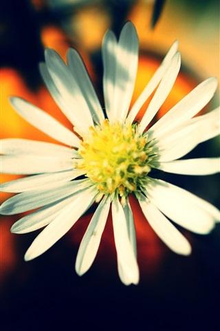 iPhone 배경 화면 따뜻한 색감의 꽃