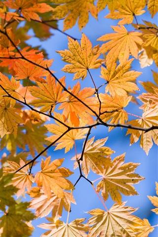 iPhone 배경 화면 가을 노란색 하단보기 잎