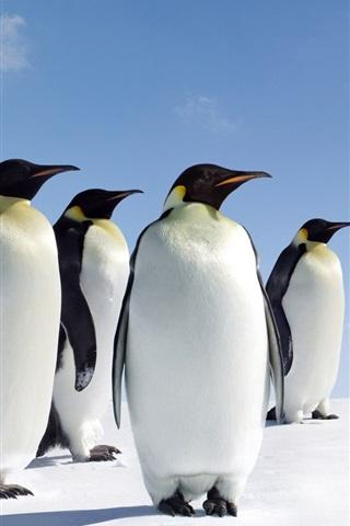 iPhone Wallpaper Four penguins