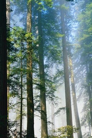 iPhone 배경 화면 신선한 숲