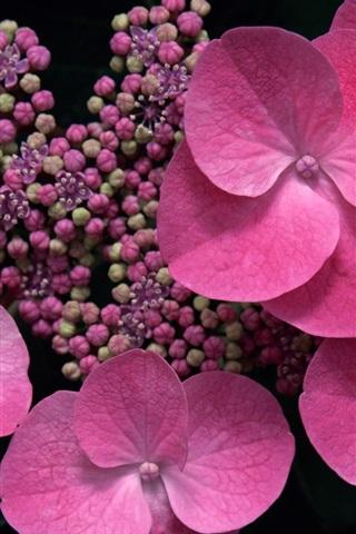 iPhone 배경 화면 핑크 꽃