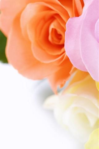 iPhone 배경 화면 장미 꽃다발
