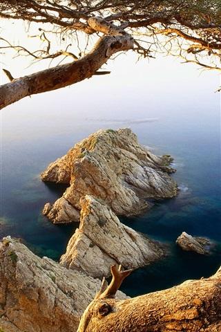 iPhone Wallpaper Tree and rocks coast