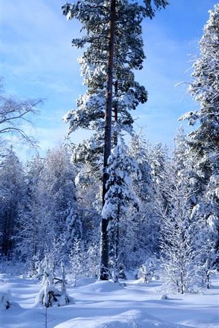 iPhone 배경 화면 많은 겨울 숲의 눈