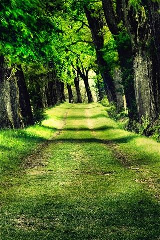 iPhone 배경 화면 삼림 공원 나무 잔디 사진