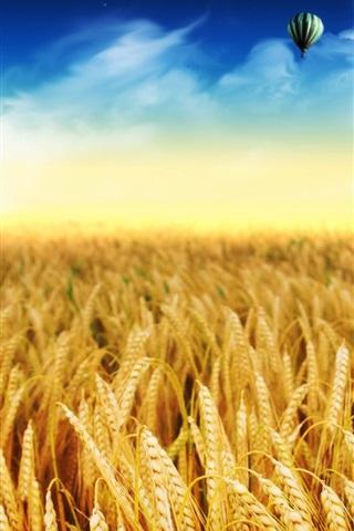 iPhone 배경 화면 황금 밀밭