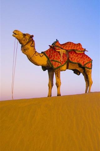 iPhone 배경 화면 사막 낙타