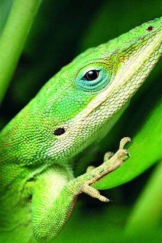 iPhone 배경 화면 녹색 도마뱀