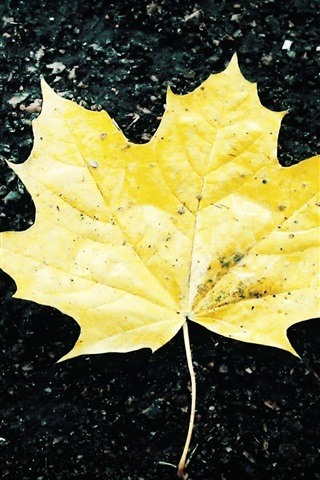 iPhone Wallpaper Ground of a yellow maple leaf