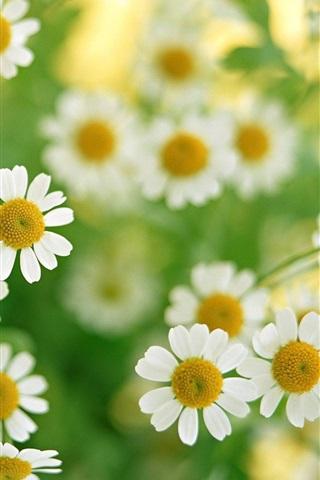 iPhone 배경 화면 로맨틱 야생 꽃