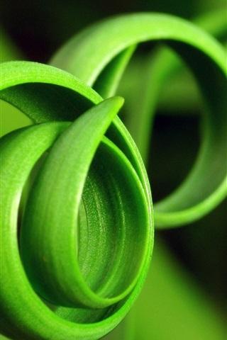 iPhone Wallpaper Spiral of green grass close-up