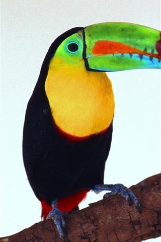 iPhone Papéis de Parede tucano imagem