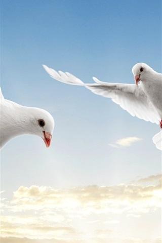 iPhone 배경 화면 흰 비둘기는 하늘 비행