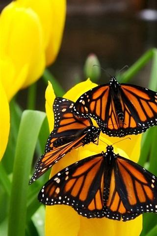 iPhone 배경 화면 노란색 튤립과 나비