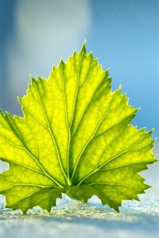 iPhone 배경 화면 클로즈업 바닥에 녹색 나뭇잎