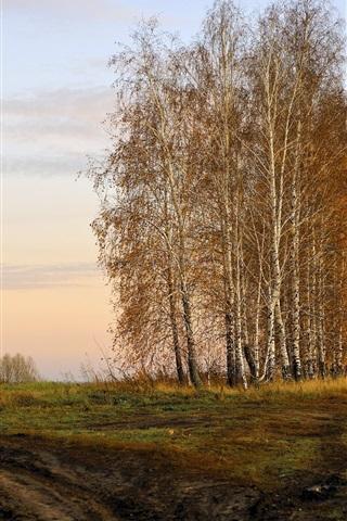 iPhone 배경 화면 가을 자작나무