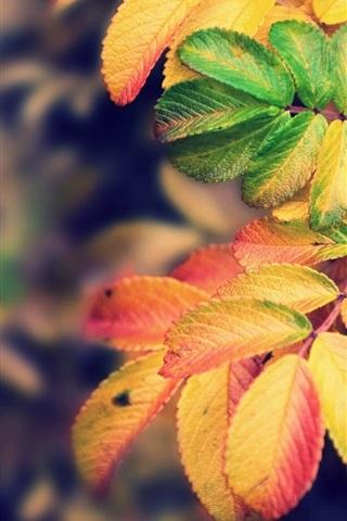 iPhone 배경 화면 가을 노란색 단풍