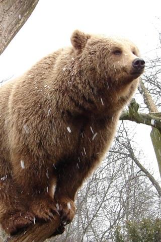 iPhone Papéis de Parede Urso de pé sobre tronco de árvore
