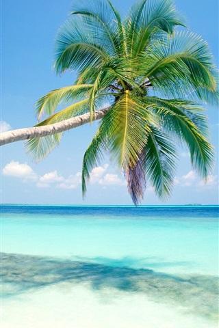 iPhone 배경 화면 블루 해변 코코넛 나무
