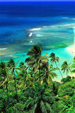 iPhone 배경 화면 하와이 해변의 코너