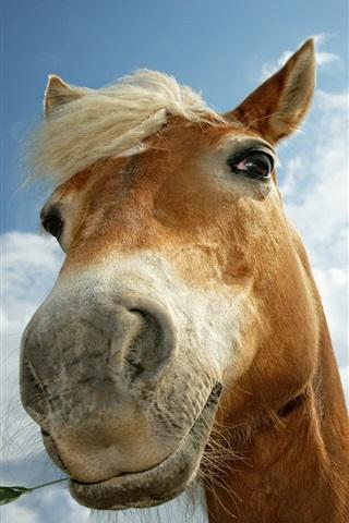 iPhone Papéis de Parede cavalo curioso