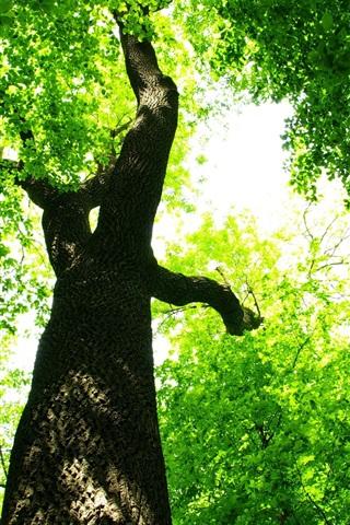iPhone 배경 화면 숲 녹색 태양 아래서 나뭇잎