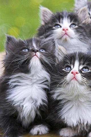 iPhone 배경 화면 새끼 고양이 모습