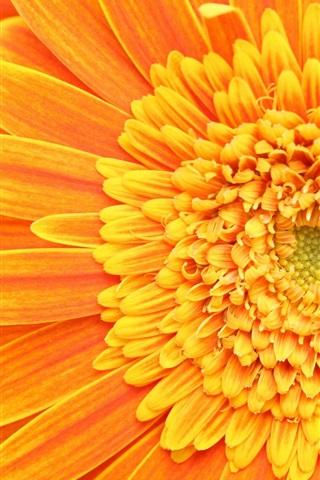 iPhone 배경 화면 꽃잎의 stamens의 pistils 오렌지