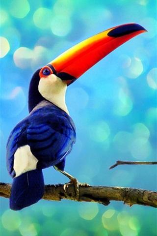iPhone 배경 화면 열대우림의 큰부리새