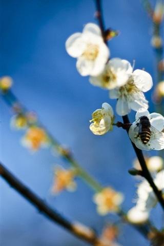 iPhone 배경 화면 비과 흰색 꽃