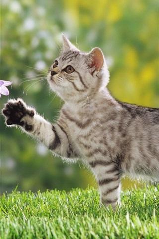 iPhone 배경 화면 꽃 고양이