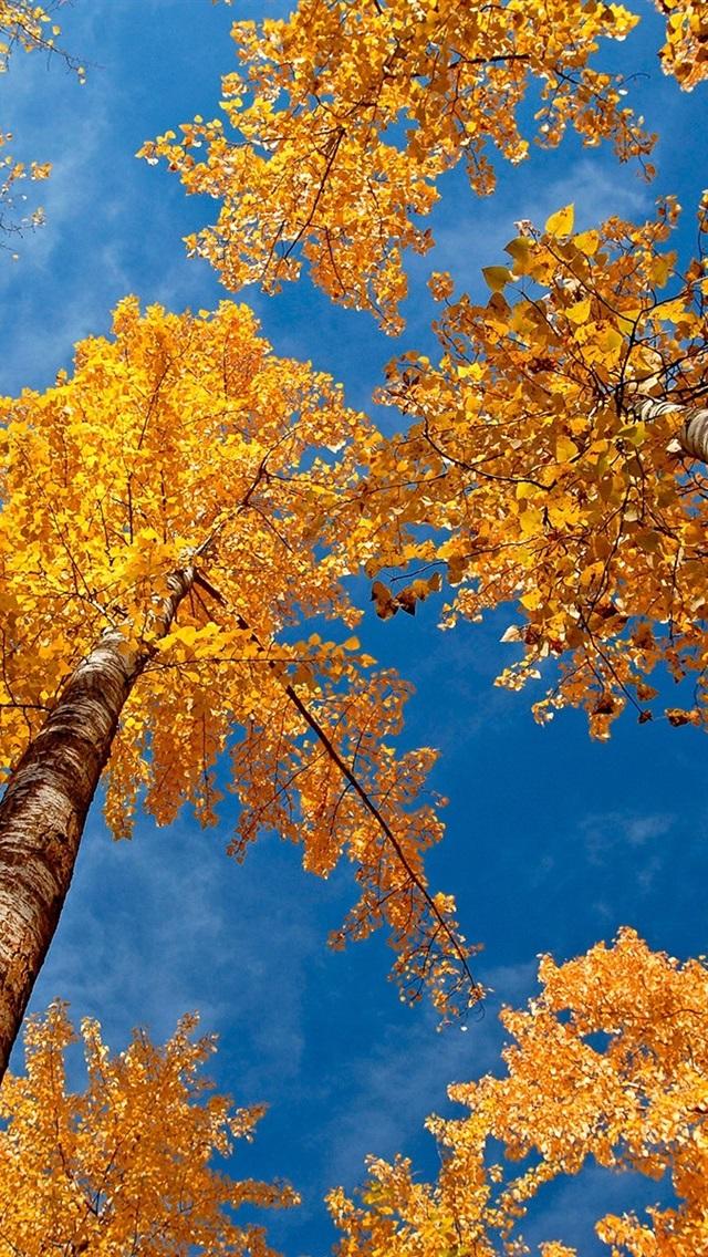 Forest Autumn Scene 640x1136 Iphone 5 5s 5c Se Wallpaper
