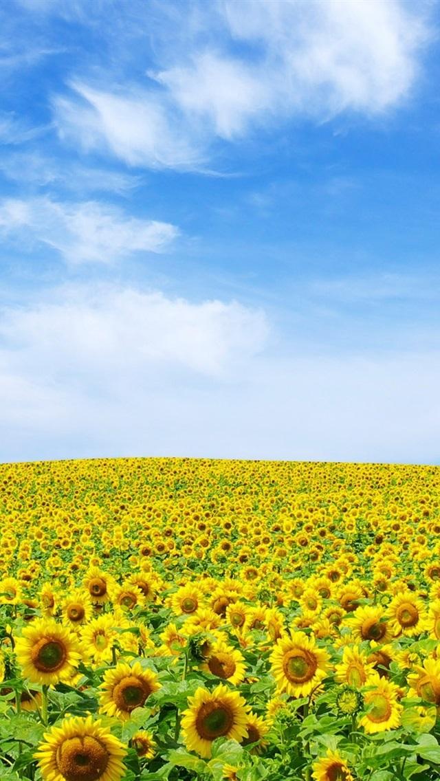 ひまわりの空の地平線 640x1136 Iphone 5 5s 5c Se 壁紙 背景 画像