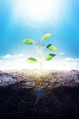 iPhone Wallpaper The sunshine of green shoots creative picture