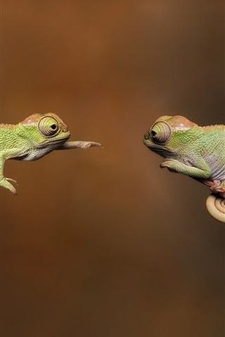 iPhone Wallpaper Two chameleon