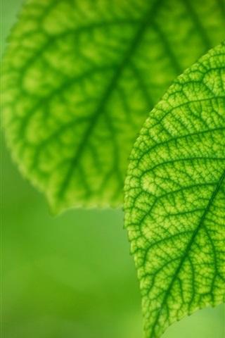 iPhoneの壁紙 春の新緑