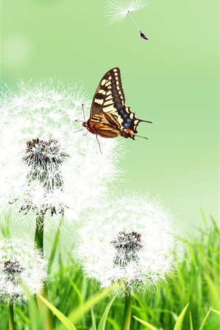 iPhone Wallpaper Summer herb dandelion flower and butterfly