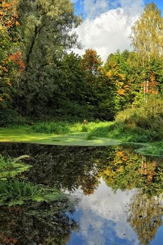 iPhone Wallpaper Summer sky swamp trees