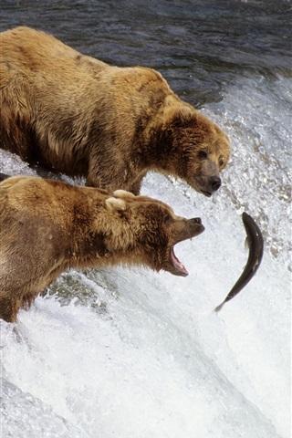 iPhone Wallpaper Three bears fishing fish