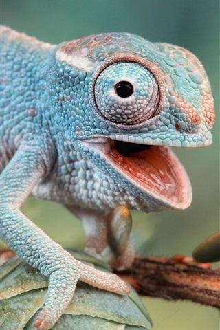 iPhone Wallpaper Chameleon's eyes