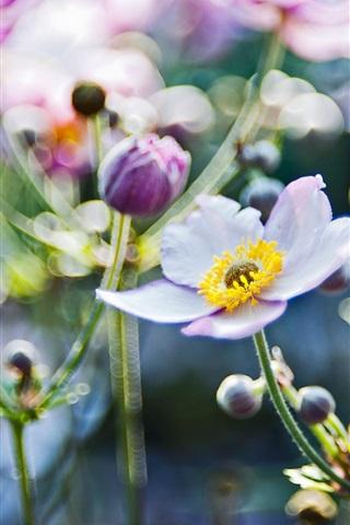 iPhone Wallpaper Focus blur flowers close-up