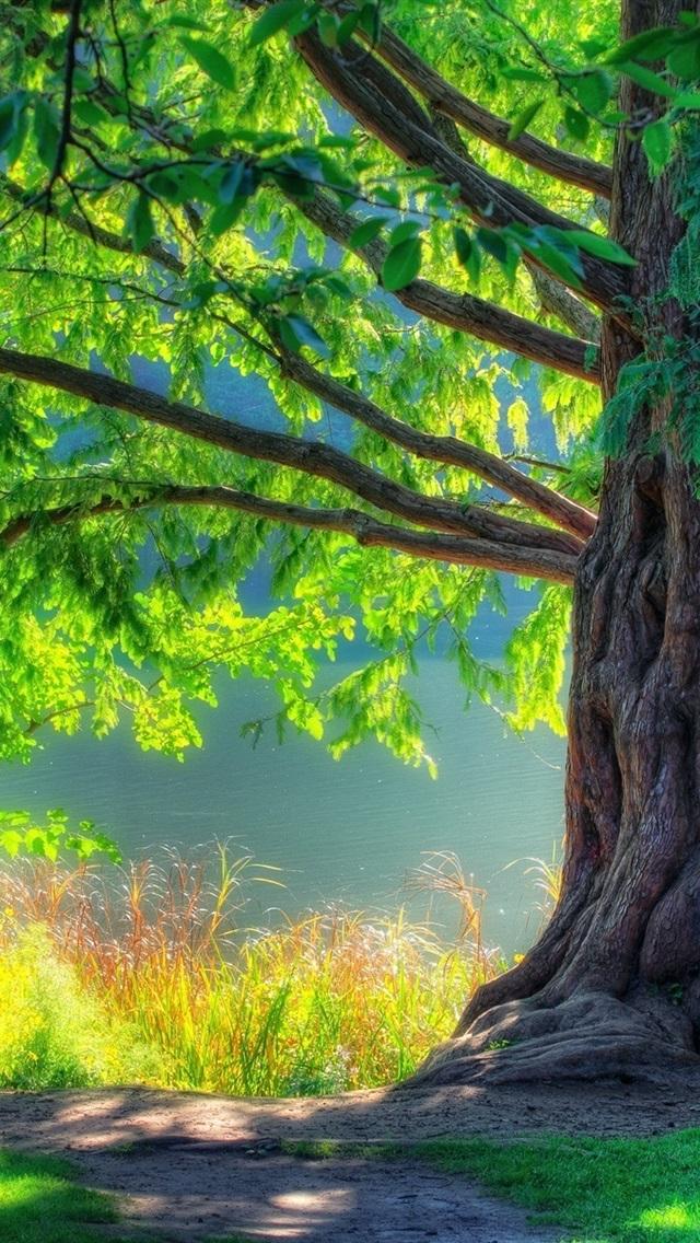 Fonds D'écran Nature Arbre Printemps Vert De La Forêt