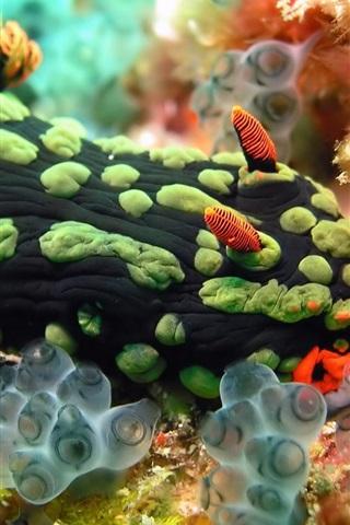 iPhone Wallpaper Sea coral