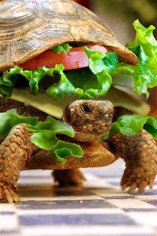 iPhone Papéis de Parede Tartaruga imagens de alimentos criativas