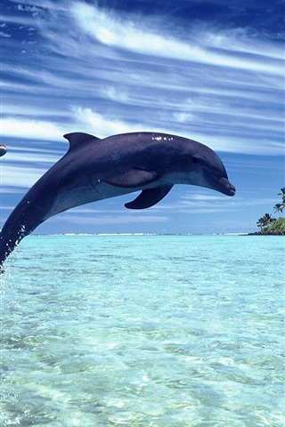 iPhone Wallpaper Cheerful dolphins in the sea