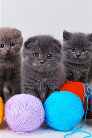 iPhone Wallpaper Cute kittens with ball of yarn