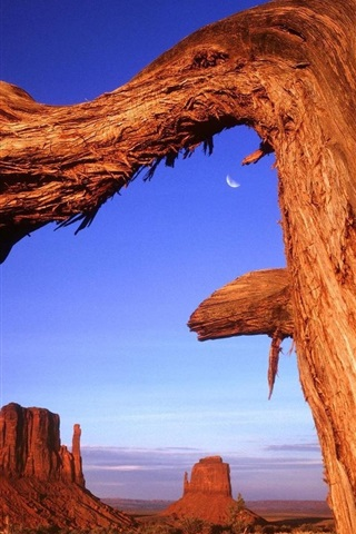 iPhone Wallpaper Desert rock dry tree in USA